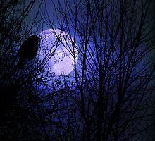 Winter's Moonglow by digitalmidge