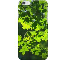 Green maple leaves backlight iPhone Case/Skin