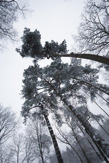 Snow & Glow by PeterBusser