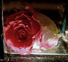 New Flower Project 105 by Kittin