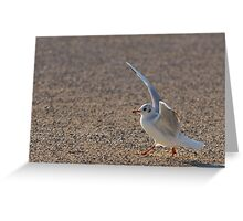Come dance with me...  Greeting Card