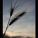 corn at sunset 2009 by fandangle-art