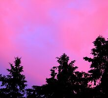 Pink Sunset by vette