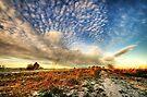 Winter Sky by Svetlana Sewell