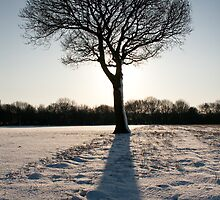 Tree portrait in the snow by Squawk