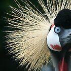 Wacky Bird - Bad hair day.  by Clickerpic