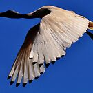 WINGS OF BEAUTY by bobbyverrills