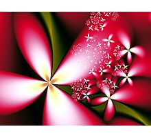 Merry Little Flowers  Photographic Print