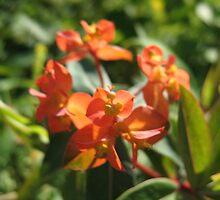 Orange Tryst Flowers by MarianBendeth