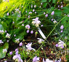Purple Teardrop Flowers by MarianBendeth