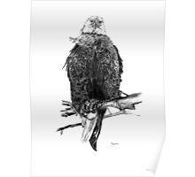 The American Bald Eagle in Charcoal Poster