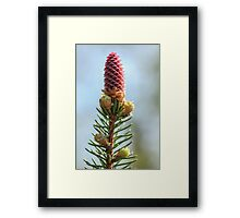 Spring Cone Framed Print