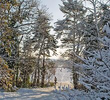 Snow Walk 1 by Bradley Old
