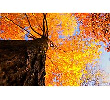 Gold nature Photographic Print