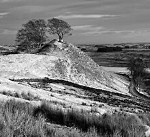 Northumberland Landscape, Northern England by Chris McIlreavy