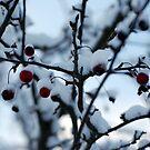 Brrr!! by inglesina
