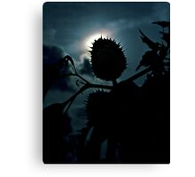 Spike Seed Pod Canvas Print