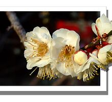 Japenese Blossom - flower overflow by jase72