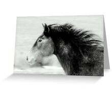 Stallion of the Great Basin Nevada  Greeting Card