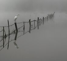 Fence In The Mist by megsphotos