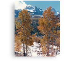 Mountain Aspens in the Rockies Canvas Print
