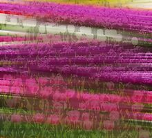 Abstract Tulip Field  by GalleryThree