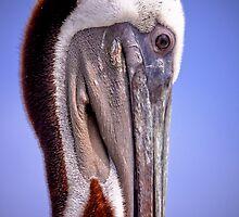 Pelican profile by flstevemck
