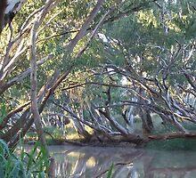 Mungallala Creek at dawn, QLD by Caroline Crawford