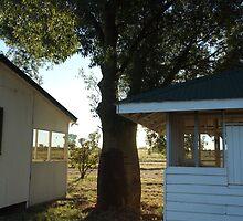 Bottle tree, Tomoo Station, QLD by Caroline Crawford