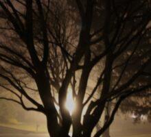 Foggy Light in the Maple Tree Sticker