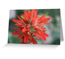 Common Red Paintbrush Greeting Card