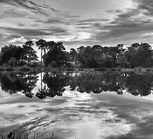 Reflections by flstevemck