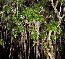 An Unusual Tree by Rosalie Scanlon