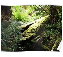 Myrtle Forest - trees Poster