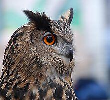 Owl Eye  by Judy Grant