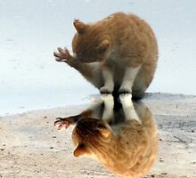 kitty reflection by tomcat2170
