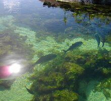 a vast Palau landscape by beautifulscenes