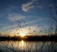 sun setting by Anne Scantlebury