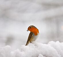 Winter Greeting by Mark Ellison