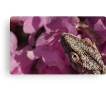A Panther Chameleon Canvas Print