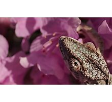 A Panther Chameleon Photographic Print