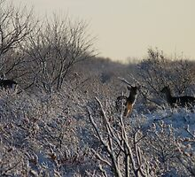 Fallow Deer in the snow 3 by DutchLumix