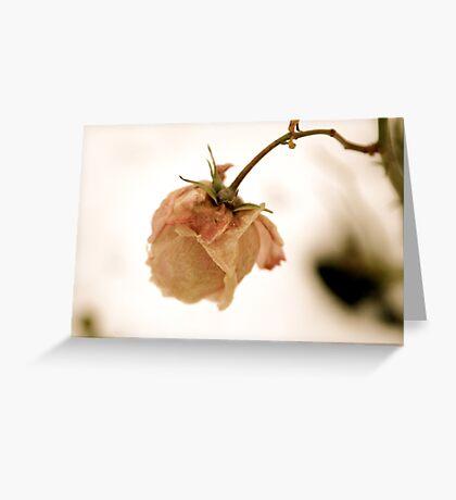 Wilting pink rose Greeting Card