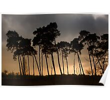 Shadow Trees Poster