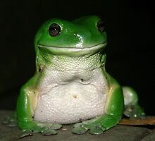 Green Tree Frog - (Litoria caerulea) by Normf