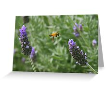 Bumble Bee on Lavender Greeting Card