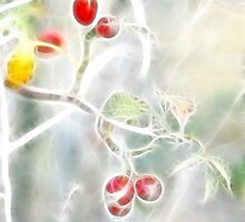 Wild berrys by Uroš Medved