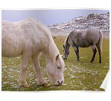 Cornwall:  Ponies Grazing at Roughtor Poster