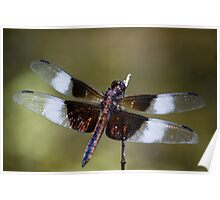 Dragonfly #2 Poster
