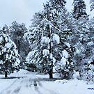 Snowy Country Road by NancyC
